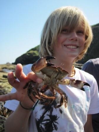 Child holding an edible Crab, (Cancer pagurus). © Matt Slater Cornwall Wildlife Trust