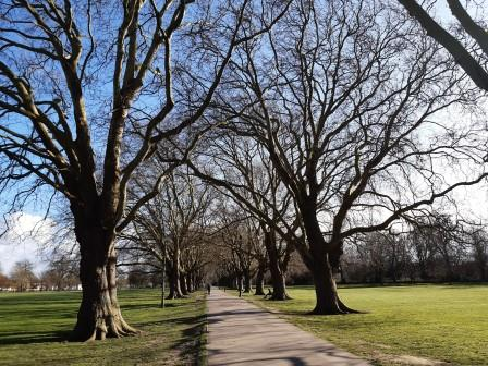 Cambridge is already a leafy and green city with many trees, including the iconic avenue of London Planes on Jesus Green. (Cambridge City Council)