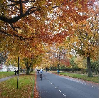 Cambridge is already a leafy and green city with many trees, including avenues of street trees. (Cambridge City Council)