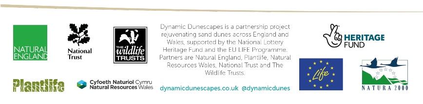 Logo: Dynamic Dubescapes partnership logo