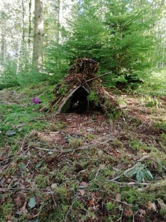 A blobster home in the forest (Jen Stephenson)