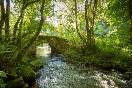 River running through Holnicote (National Trust Images / Chris Lacey)