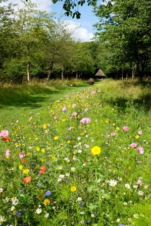 Wildflower borders at Polesden Lacey (National Trust Images / Mark Wigmore)