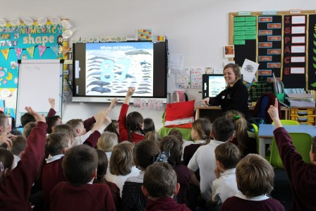 Whales and dolphins in the classroom (ORCA)