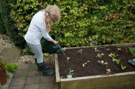 Young girl watering vegetables in a raised bed (RHS / Tim Sandall)