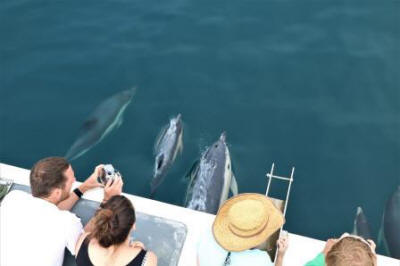 Volunteer Sea-Watchers dolphin watching off Newquay,  Cornwall on 3 August 2018.  Photo credit: Newquay Seasafaris and Fishing