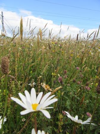 Site visit in July 2017 (Greener Greenways Scotland)
