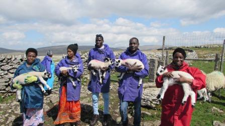 A group from Horton Housing enjoying a session lambing  (Yorkshire Dales Millennium Trust)