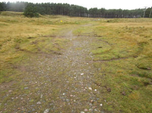 Rare habitats being damaged by off-road vehicles: Loch Fleet SSSI – Vehilce damage to sand dune (SNH)