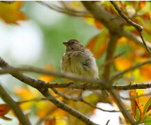 Being able to see birds, shrubs and trees around the home benefits mental health. (image: University of Exeter)