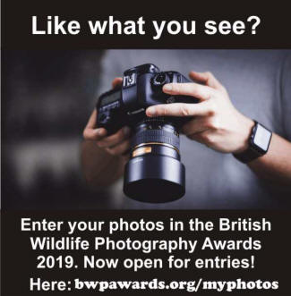 BWPA awards now open