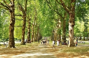 avenue of trees (image: defra)