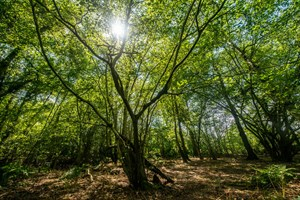 More than three hectares of the stunning Broadwells Wood in Warwickshire will be lost to HS2. (Photo: Phil Formby/WTML)
