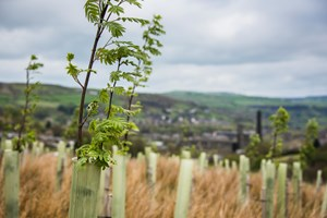 TRUSTwoods can help landowners in ten pilot areas get more trees in the ground (Photo: Jill Jennings)
