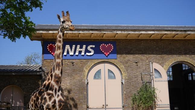 Giraffe House NHS (© ZSL London Zoo)