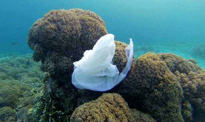 Plastic bag in the ocean (credit Making Oceans Plastic Free.)
