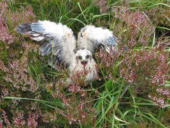 (image: Scottish Gamekeepers Association)
