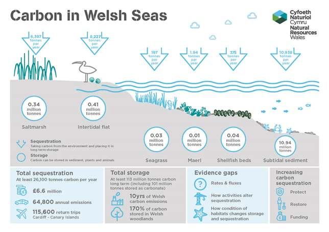 Carbon in Welsh Seas infographic from NRW