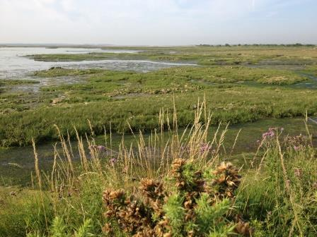 Saltmarsh at Chichester Harbour (University of Portsmouth)