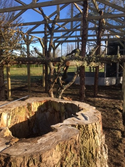 the inside of the wildcat enclosure, with a hollowed out log in the foreground and a climbing frame of rough logs.