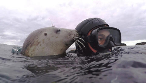 Seal diver Ben Burville with one of his dive buddies - a wild grey seal off the Farne Islands, UK. Photo by Ben Burville.