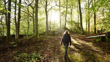 An early morning walk in the woods at Fell Foot, Cumbria (National Trust images / John Millar)