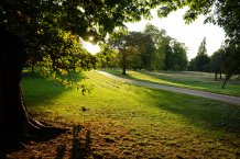 Developing urban green spaces could help sustainability of the planet (image: University of Exeter)