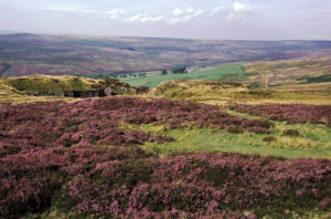 (image: The Moorland Association)