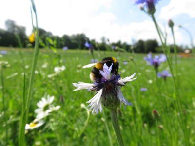 (image: Buglife)