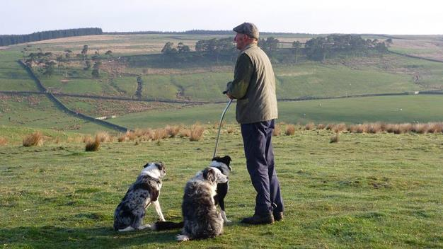 A farmer and his dogs on Hill Gill Farm. Credit: Natural England