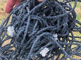 Plastic rope transporting living corals, washed ashore on Easter Island. Photo by James T Carlton