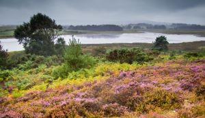 Purbeck heaths (c) Michael Brown