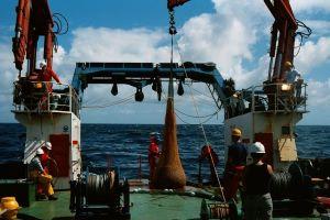 Trawl sampling in the North East Atlantic (image: University of Glasgow)