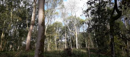 Ash trees in Fishpool Valley (National Trust Images)