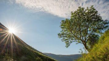 """The Survivor"" at Carrifran is Scotland's 2020 Tree of the Year winner. Credit: Aidan Maccormick / scotlandbigpicture.com / WTML"