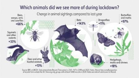 Infographic detailing which animals we saw more of during lockdown Source: BRC at UKCEH. Data entered into iRecord (Natural History Museum / Beyond Words Studio)