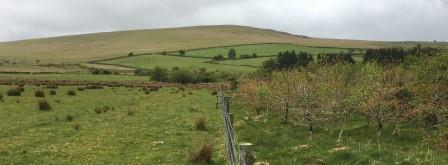 Pasture and native woodland sit side by side at Colly Brook on Dartmoor (Credit Paul Lunt, University of Plymouth)