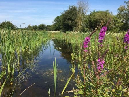 Finham Brook Pond (HS2 Ltd)