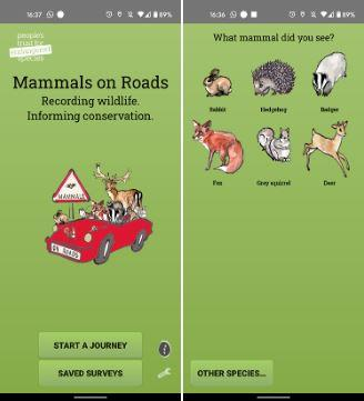 Screenshots from the Mammals on Roads app. Credit PTES