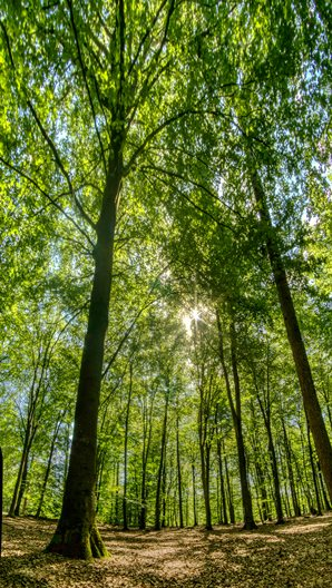 sunlight streaming through the canopy of green trees