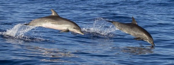 two dolphins leaping out of the sea