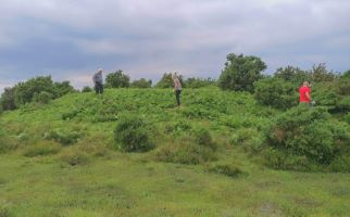 Volunteers clearing bracken from Bronze Age barrows in the New Forest National Park landscape