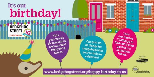 Hedgehog Street 10 year anniversary celebration infographic