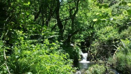 Llechwedd Einion waterfall credit Coetir Anian