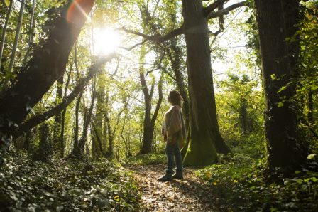 Woman in forest in sunlight (Natural Resources Wales)