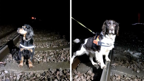 two photos of spaniels standing on railway lines