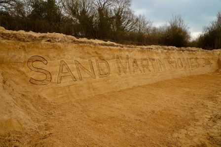 Sand martin nest bank © Surrey Wildlife Trust