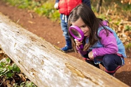 pupil looking at a fallen tree through a magnifying glass at Nature Friendly Schools (Adrian Clarke)