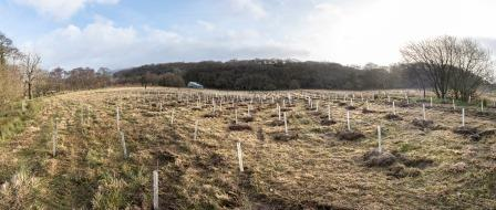 The view of Hafod Garegog National Nature Reserve from the planting site. Credit Paul Harris & NT Images