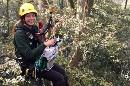 Anna Gardner carrying out fieldwork in the forest canopy (University of Birmingham)